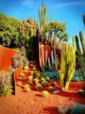 Kaktusgarten vollständig… Stockfoto