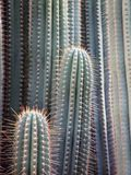 Kaktusgrannskapen arkivbilder
