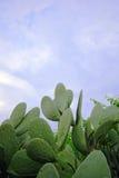 kaktusgreen Royaltyfri Bild