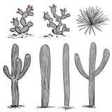 Kaktusgruppe Kaktusfeigekaktus, blaue Agaven und Saguaro Hand gezeichneter Kaktusvektor Graue und rosa Palette Stockfotos