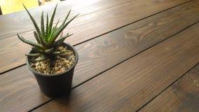 Kaktushintergrund Stockbilder