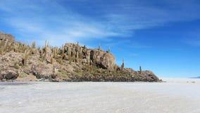 Kaktushintergrund in Isla Incahausi, Salar de Uyuni, Bolivien lizenzfreies stockfoto