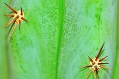 Kaktushintergrundnahaufnahme Lizenzfreies Stockfoto