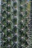 Kaktusinbindnings- och stödcloseup Arkivbild