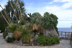 Kaktusinsel Lizenzfreies Stockfoto
