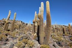 Kaktusinsel in Uyuni-Salz flach Stockbild