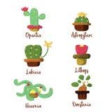 Kaktuskleiner kuchen Lizenzfreie Stockbilder