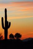 Kaktuskontur royaltyfri fotografi