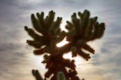 Kaktuskontur i ökenlandskapsolnedgång Fotografering för Bildbyråer