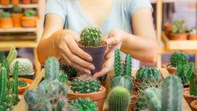 Kaktuskrukan holded vid händer av kvinnan i burk Arkivbild