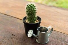 Kaktuskrukan och att bevattna kan modellera Arkivfoto
