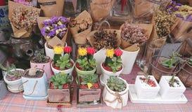 Kaktuskrukor och torkade blommabuketter på tabellen på en blomsterhandel Arkivbild
