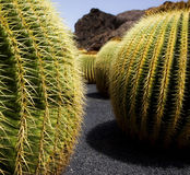 Kaktusland Stockfotos