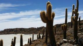 Kaktusland in der trockenen Wüste Stockbilder