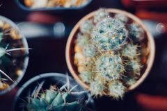 Kaktusliebhaber Stockfotos