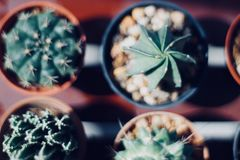 Kaktusliebhaber Lizenzfreie Stockfotografie