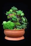Kaktusmagasin Royaltyfria Bilder