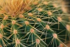 Kaktusnärbild Royaltyfri Bild