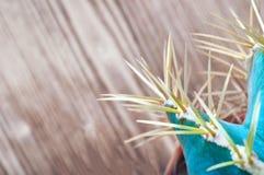 Kaktusnadeln auf hölzernem Hintergrund, Draufsicht Blaugrüner Kaktus mit gelben langen Nadeln Nahaufnahme, Kopienraum stockfotos