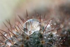 Kaktusnadeltropfen-Wasserhintergrund Lizenzfreie Stockbilder