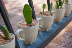 KaktusOpuntia Arkivfoton