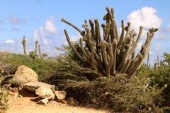 kaktusowa ampuła Zdjęcia Royalty Free