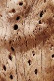Kaktusowa drewno barkentyny tekstura Zdjęcie Royalty Free