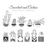 Kaktusowa ilustracja Wektorowy sukulent i kaktusa ręka rysujący set W drzwiowych roślinach w garnkach ilustracji