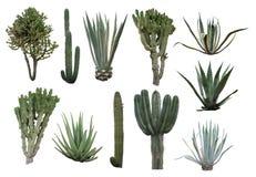 kaktusowa kolekcja Fotografia Royalty Free