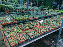 Kaktusowa kolekcja Obrazy Stock