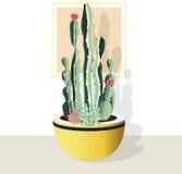 Kaktusowa kolekcja na białym tle Zdjęcie Royalty Free