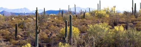 kaktusowa pomnikowa krajowa organowa drymba Fotografia Royalty Free