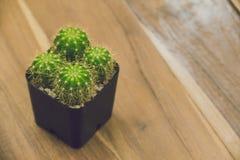 Kaktusowa roślina w garnku, rocznika filtr, miękka ostrość Obrazy Royalty Free