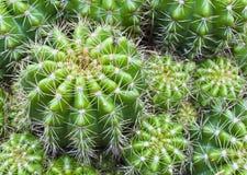 kaktusowa roślina zdjęcia stock