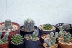 Kaktusowa roślina Fotografia Stock