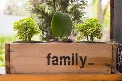 Kaktusowa roślina obraz royalty free