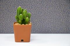 Kaktusowa roślina na stole w biurze Obraz Royalty Free
