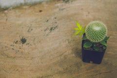 Kaktusowa roślina w garnku i copyspace Zdjęcia Royalty Free