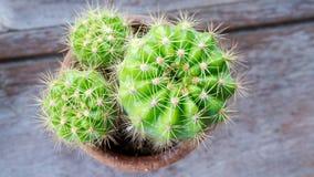 Kaktusowa selekcyjnej ostrości plama jako tło tekstura Obraz Stock