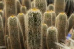 kaktusowa szklarnia Zdjęcia Royalty Free