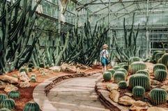 Kaktusowa szklarnia z skalistą ziemią, kamieniami i Złotą baryłką Ca, obrazy stock