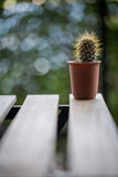 Kaktusowa tekstura Zdjęcia Royalty Free
