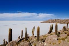 kaktusowa wyspę. Fotografia Royalty Free