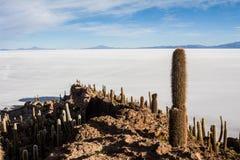 Kaktusowa wyspa w uyuni obraz stock