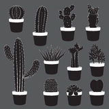 Kaktusowe i Pustynne rośliny Inkasowe Obrazy Stock