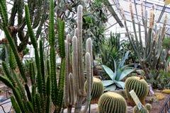 Kaktusowe ogrodowe rośliny Fotografia Stock