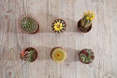 kaktusowe rośliny Obrazy Royalty Free