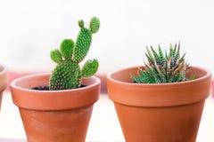 Kaktusowe rośliny w kwiatu garnkach na białym tła zakończeniu up _ Zdjęcia Stock