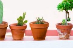 Kaktusowe rośliny w kwiatu garnkach na białym tła zakończeniu up _ Obraz Royalty Free