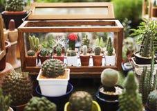 Kaktusowego Houseplant dekoraci Inkasowy set Zdjęcia Royalty Free